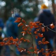 Ein Ast mit Herbstlaub im Wald vor einer Waldbaden-Gruppe