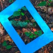 Bild von einem blauen Rahmen aus Papier auf dem Waldboden