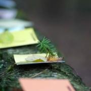 Bild von verschiedenfarbigen Zetteln auf einem Baumstamm
