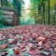 Bild von einem mit Laub bedecktem Waldweg