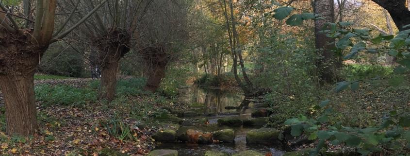 Bild eines Bachlaufs mit großen Steinen im Wasser und Kopfweiden und Birken entlang des Ufers